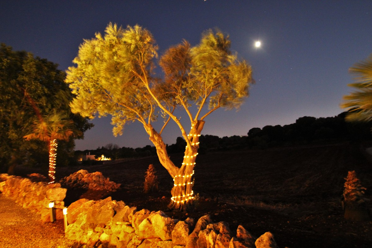 Settimo Cielo Olive Tree Moon