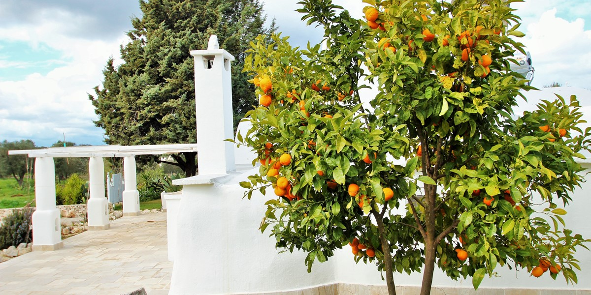 Trullo Formosa Fruit Tree