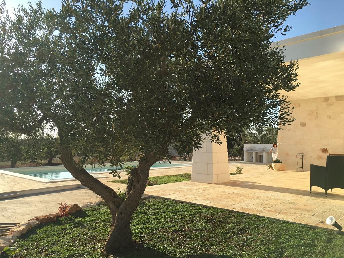 Villa Sudest Olive Tree