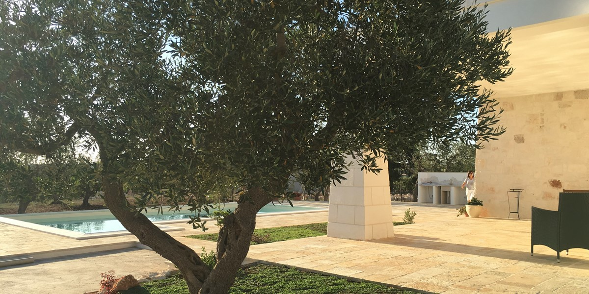 Villa Sudest Olive Tree